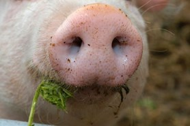 Farmářské trhy provoní zabijačkové speciality