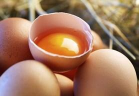 Superpotravina přímo z kurníku, jak číst informace na vejcích