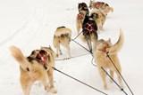 Ve Stochově u Kladna se uskuteční již osmnáctý ročník tradičních závodů psích spřežení