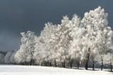 Pohádková zima na Vysočině láká k fotografování