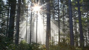 O další peníze na hospodaření v lesích se na Vysočině bude moci žádat celé září