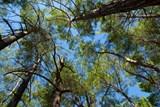 Zlín vysadí na podzim téměř čtyři sta stromů. Kromě sucha je ohrožují zloději a vandalové
