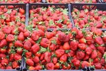 Čerstvě nasbírané jahody nakoupíte na pátečních farmářských trzích