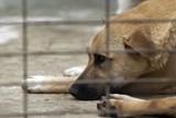 Opuštění psi z bohumínského útulku mají nové boudy