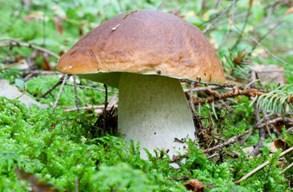 Lékaři zatím nemuseli řešit otravy, houby nerostou