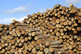 Zloděj lesa dopaden
