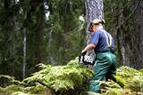 Období vegetačního klidu je příležitostí pro potřebné kácení