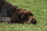 Poplatky za odpad a psy zůstávají ve Frýdku-Místku stejné