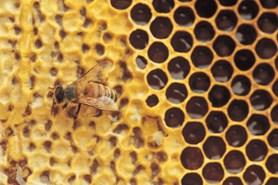 Přijďte na náměstí a prožijte den s vůní medu