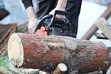 Městské lesy v Litomyšli plánují v roce 2019 vysadit přes 40 tisíc stromů