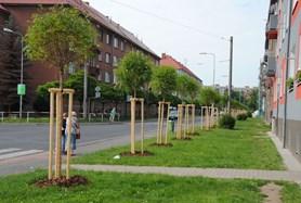 V jirkovsk�ch ulic�ch p�ibyly stromy