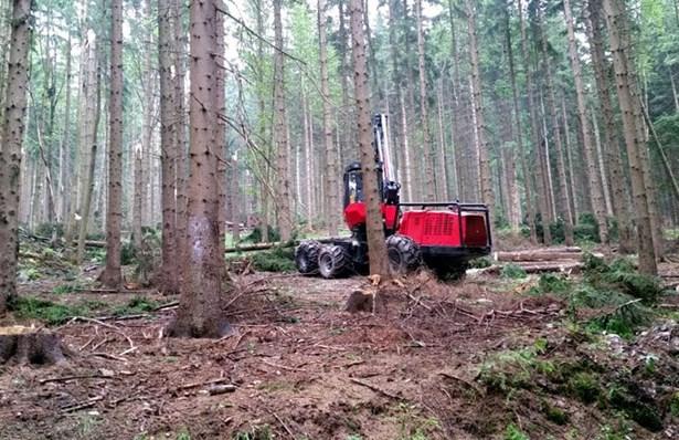 Popis: Vítr poničil ve státních lesích 214 tisíc metrů krychlových dříví.