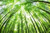 Lidé chodí do lesa nejčastěji za odpočinkem. Nejvíce jim vadí pohozené odpadky