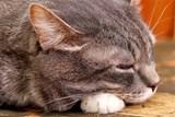 Zlín poskytuje příspěvek na kastraci koček a kocourů. Reguluje tím počet kočičích tuláků