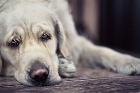 Nový Jičín podepsal dohodu o ukončení výstavby útulku pro psy