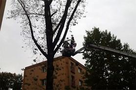 K�cen� strom� na n�kolika m�stech Moravskoslezsk�ho kraje