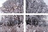 Galerie U Zlatého beránka zve na výstavu Stromy od Evy Matyldy Jiřičkové