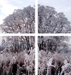 Galerie U Zlat�ho ber�nka zve na v�stavu Stromy od Evy Matyldy Ji�i�kov�