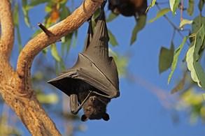 V Královské mincovně se zaměří na život netopýrů i dalších savců