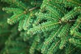 Mimořádný svoz hnědých nádob a vánočních stromků v Hradci