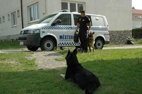 V pátek se strážníkům dařilo, vypátrali tři celostátně hledané osoby