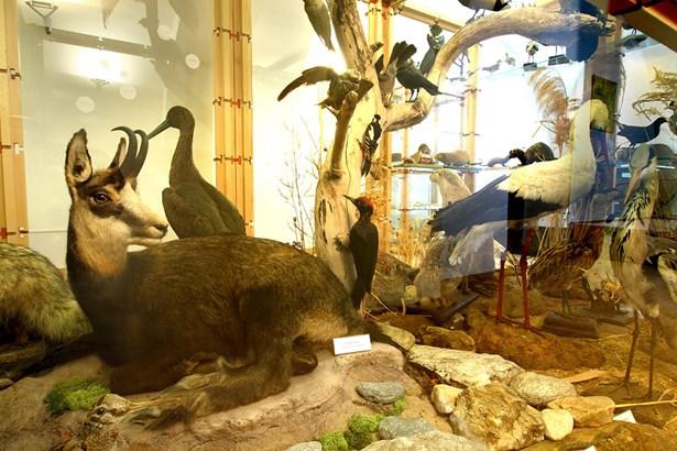 Popis: Expozice fauny a flory Jesenicka.