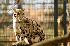 Ve�ern� komentovan� prohl�dky v ostravsk� zoo