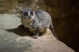 V Zoo Ostrava se otev�e nov� expozice No�n� Tanganika