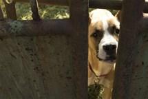Str�n�ci nalezli na opu�t�n�m pozemku dva zb�da�en� psy p�iv�zan� ke k�ov�