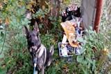 V Dasnicích řádil zloděj, ukrytý lup vypátral  služební pes Garrit