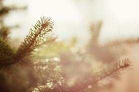 Valašské Meziříčí zakázalo vstup do lesů mladších 20 let
