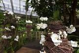 Botanická zahrada zve na večerní provázení, originální valentýnské rande i tradiční výstavu orchidejí