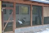 Opatření k ptačí chřipce v ústecké zoo