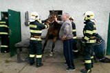 Záchrana koně uvězněného v okně se šťastným koncem