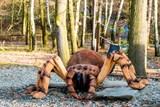 Obří pavouk v Zoo Ostrava