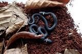První narození  hadi v Domě NATURA