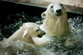 Mezinárodní den ledních medvědů 27. února