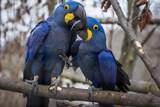 Přijďte oslavit svátek zamilovaných do Zoo Ostrava