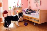 Podhorská nemocnice má nového zaměstnance – je čtyřnohý a jmenuje se Merlin