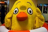 Žluté Kuře se objeví také v Táboře