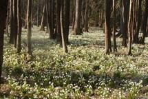 Znovuvyhlášení přírodní rezervace Velká a Malá olšina