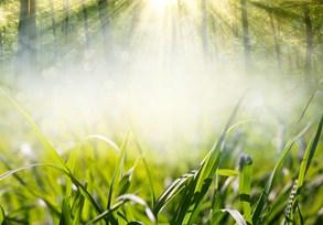 Tráva se zelená, kouzelné vločky se foukají…