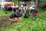 Hasiči zachraňovali na Bruntálsku koně s nohou zaklesnutou v jímce