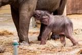 Slůně v ostravské zoo se má k světu