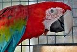 ZOO Tábor hledá jména pro své papoušky