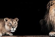 Brněnské lvy můžete nyní sledovat online na webu