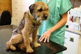 Záchrana psa z liščí nory se podařila, pes je naživu
