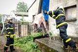 Moravskoslezští hasiči v pátek zachránili dvě mokrá zvířata - z jímky a stromu