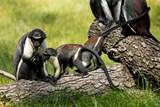 Den bez palmového oleje