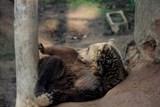 Návštěvníci ZOO Tábor mají poslední letošní možnost zažít atmosféru usínající zoologické zahrady
